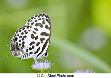 white butterfly in garden or in green nature