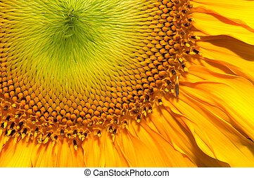 Close up shot of Sun flower seeds background