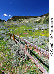 Bighorn National Forest Landscape - Wildflowers grow along a...