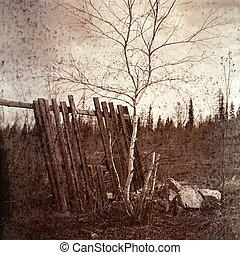Vintage image of a landscape. Old fence and birch. - Vintage...