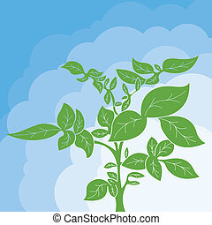 Potato plant bush vector concept