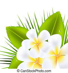 Beautiful Frangipani - 3 Beautiful Frangipani, Isolated On...