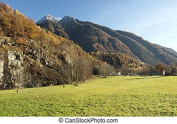 Autumn alpine pasture landscape