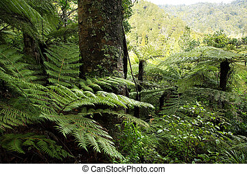 Jungle - Large trees in tropical jungle