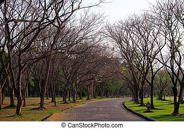 autumn wayside trees - Beautiful autumn wayside trees