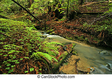 Lush rain forest stream with ferns and clovers