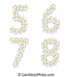 Plumeria alphabet isolated on white background 5 6 7 8