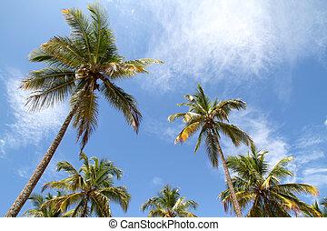 Palm Trees - Palm Trees and a beautiful blue sky. Photo...