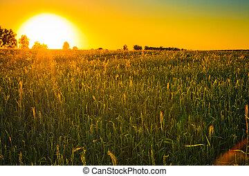 ocaso, brillante, verde, encima, campo