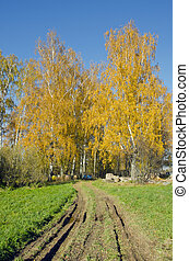 Rural road autumn birches and  hives near them.