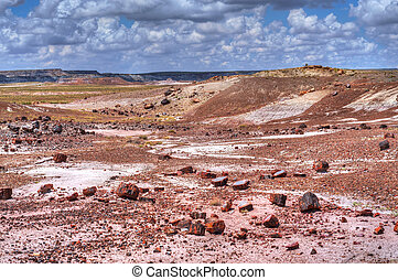 Petrified Forest - Petrified forest in Arizona USA