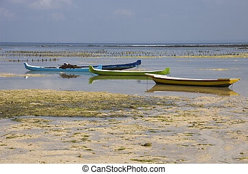 Seaweed farming on the island of Nusa Lembogan in Indonesia