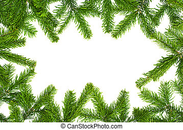 Fresh fir twigs border