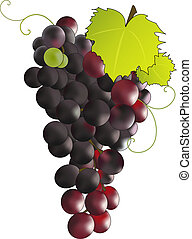 Grapes - Bunch of black grapes.