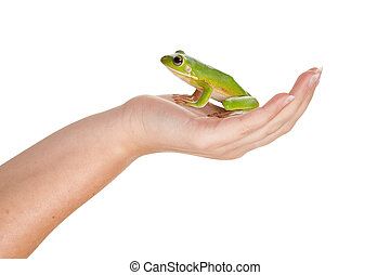 Prince frog on her hand - Female hand holding a beautiful...