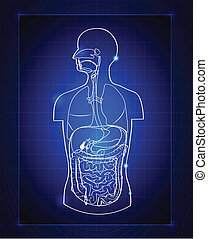 gastrointestinal system - Abstract gastrointestinal system