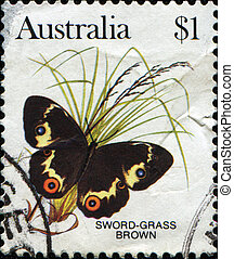 Swordgrass Brown Butterfly - Tisiphone abeona - AUSTRALIA -...