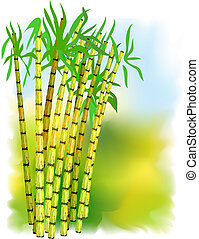 Plant of sugar cane Vector illustration