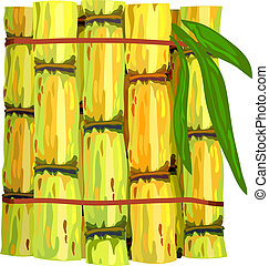 Stalks of sugar cane. Vector illustration on white...
