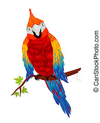 Starring parrot, isolated object over white background