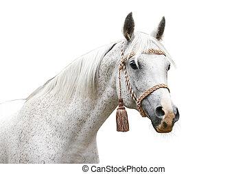 arab head on sky  - arab horse head on sky on white