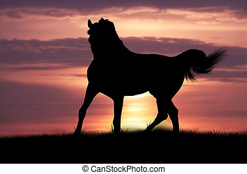 horse in sunrise - arabian horse in sunrise