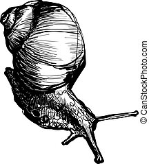 little snail crawling and produces horns - sketch a little...