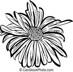 flower garden resembling a daisy