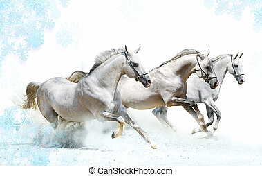 winter horses - trio of horses in snow