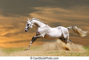 blanco, caballo, ocaso