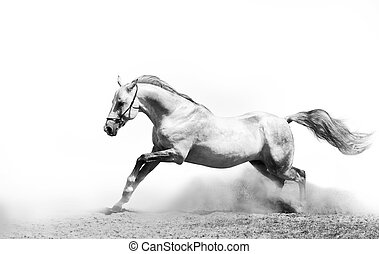 stallion in dust on white