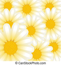 Chamomile - Vector picture with chamomile