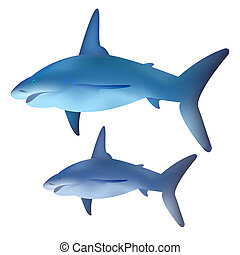 Vector shark for your design
