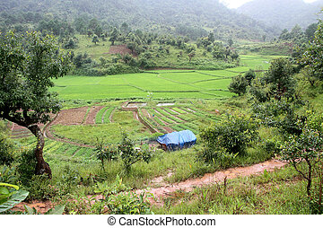 Footpath and rice field - Footpath near rice field in...