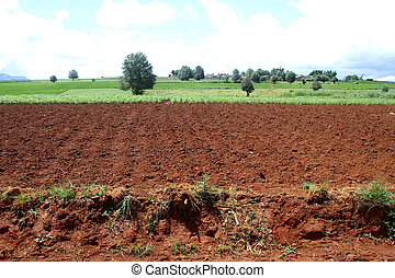 ploughing field - Green and v fields in Shan state, Myanmar