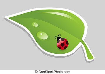 vector leaf with ladybird.