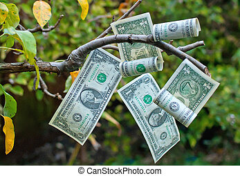Money tree - Ripening dollars hanging off a tree branch