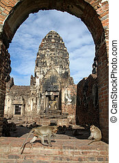 Monkey in Phra Prang Sam Yot - Monkeys and old prang in Phra...