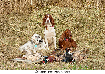 Successful bird shoot - Three Bird dog resting after the...