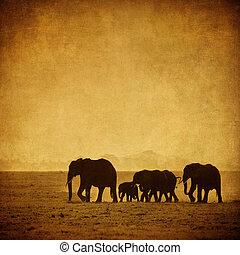 elephant's, family