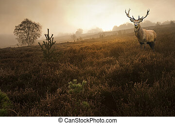 Foggy misty Autumn forest landscape at dawn with red deer...