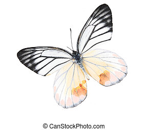 Black and white butterfly on a lonely and isolated white...