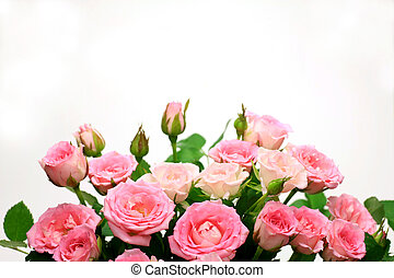 rose - I took many pink roses in a white background