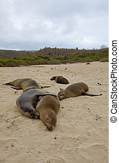 Sea lion colony on Santa Fe island, Galapagos