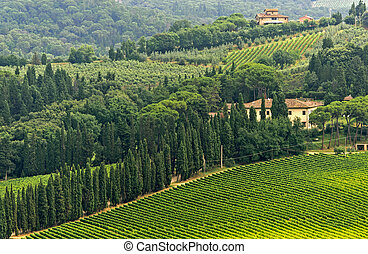VIneyards of Chianti Tuscany - Hills of the Chianti region...