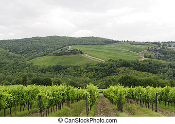 VIneyards of Chianti (Tuscany) - Hills of the Chianti region...