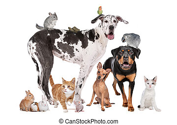 Pets in front of a white background - Group of Dogs, cats,...