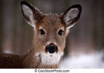 Young Deer - Young deer at Ojibway Park - Windsor, Ontario