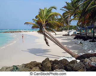 Beach with runner and palm trees in island Barbados...