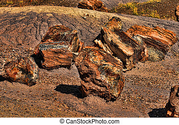 Trees Petrified - Petrified trees in the petrified forest in...
